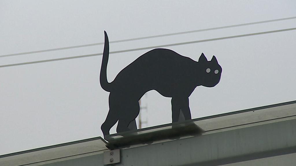 Kočka z Olomouce
