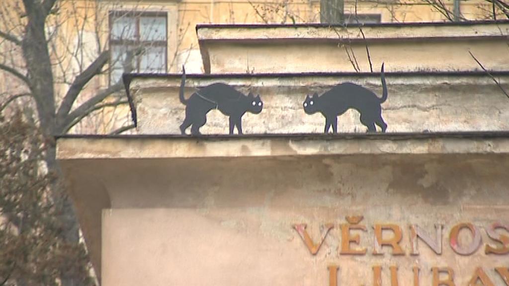 Kočky z Olomouce