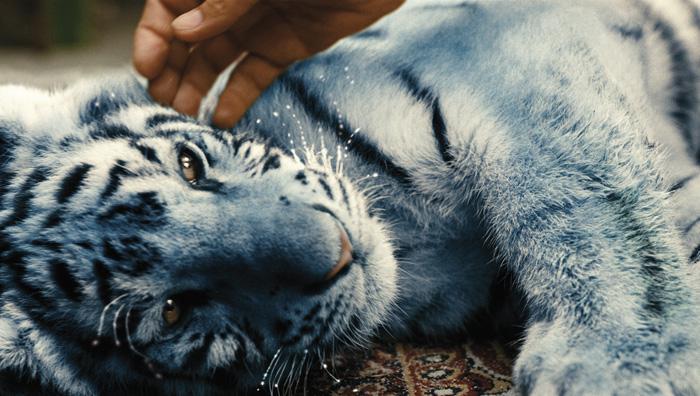 Modrý tygr