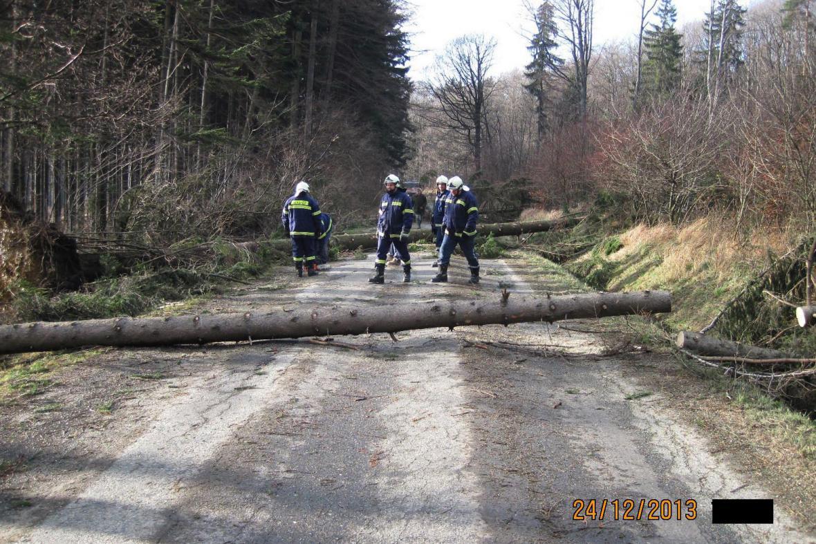 Stromy na silnici