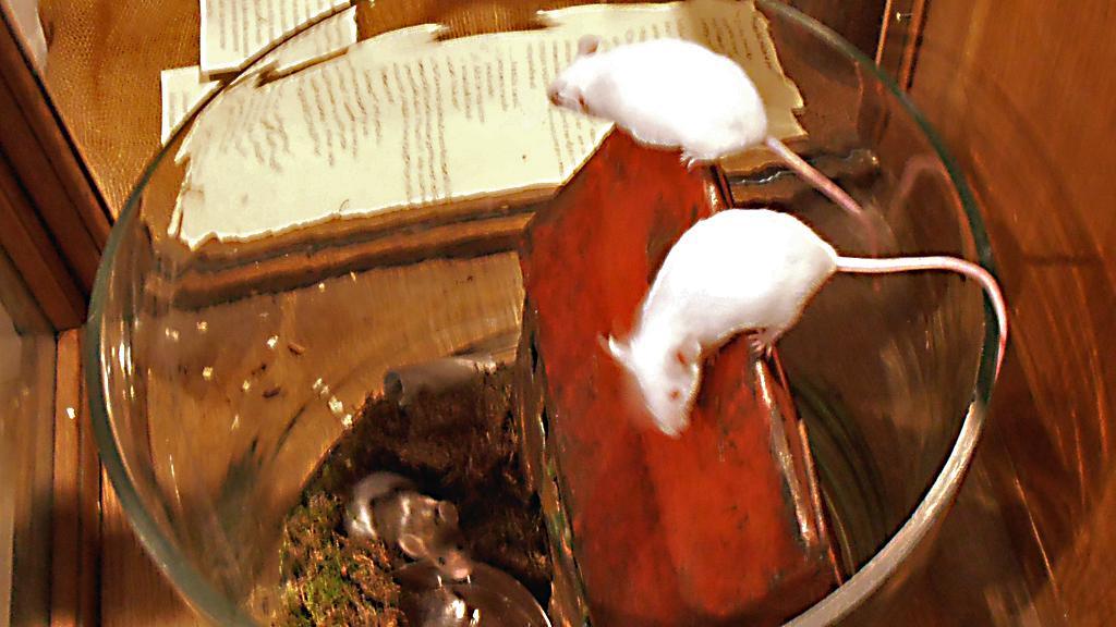 Bílé myšky na výstavě Staropražské Vánoce