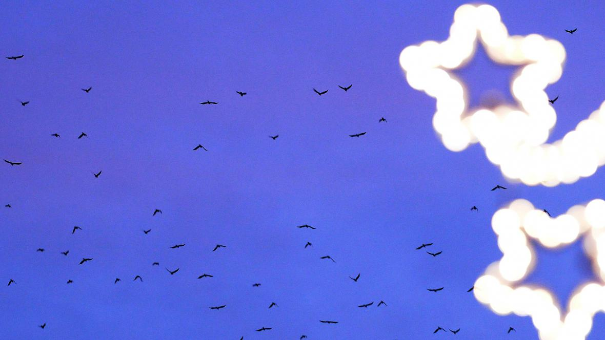 Havrani při každodenní odpolední pouti nad Ostravou