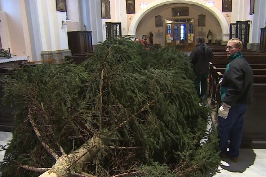 Příprava vánočního stromu