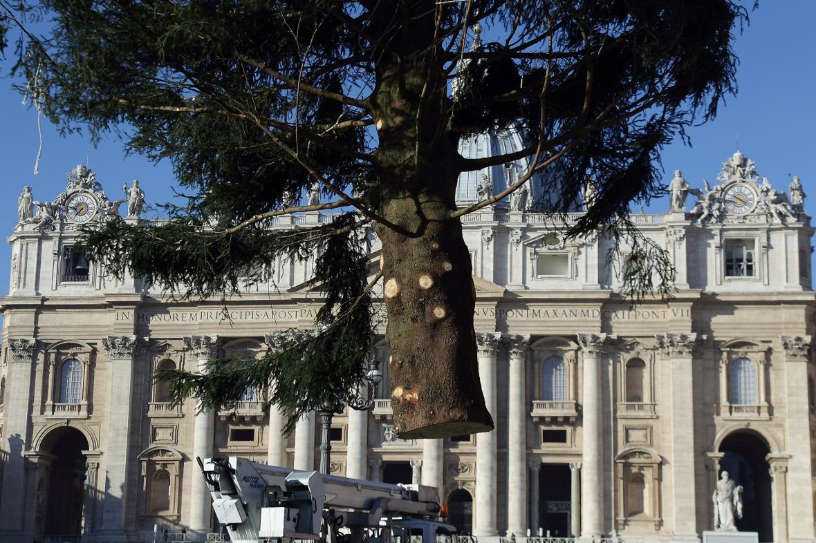 Instalace vánočního stromu pro Vatikán