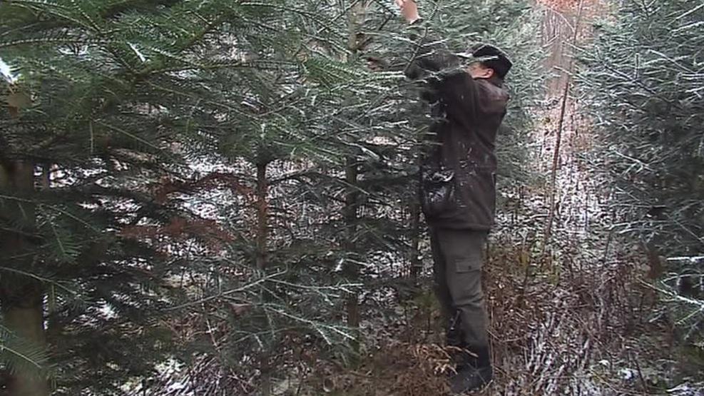 Lesníci stromky bedlivě hlídají