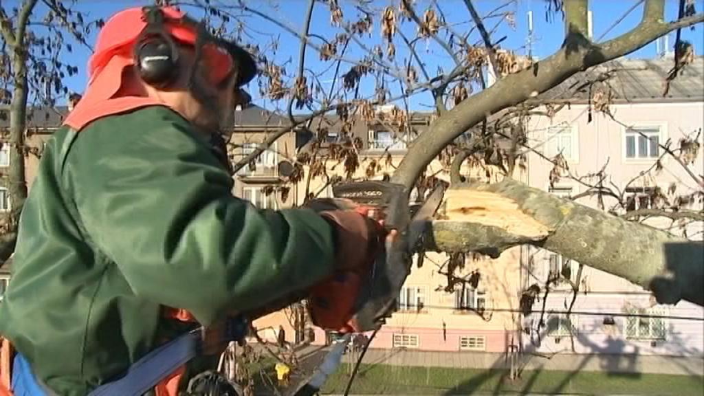 Kácení poškozených stromů na olomouckém výstavišti Flora