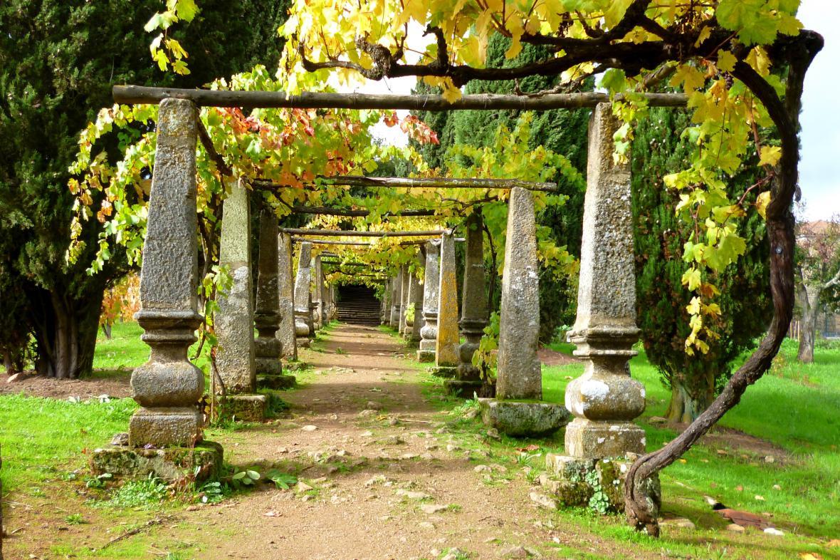 Vinná réva v zahradách Casa de Mateus
