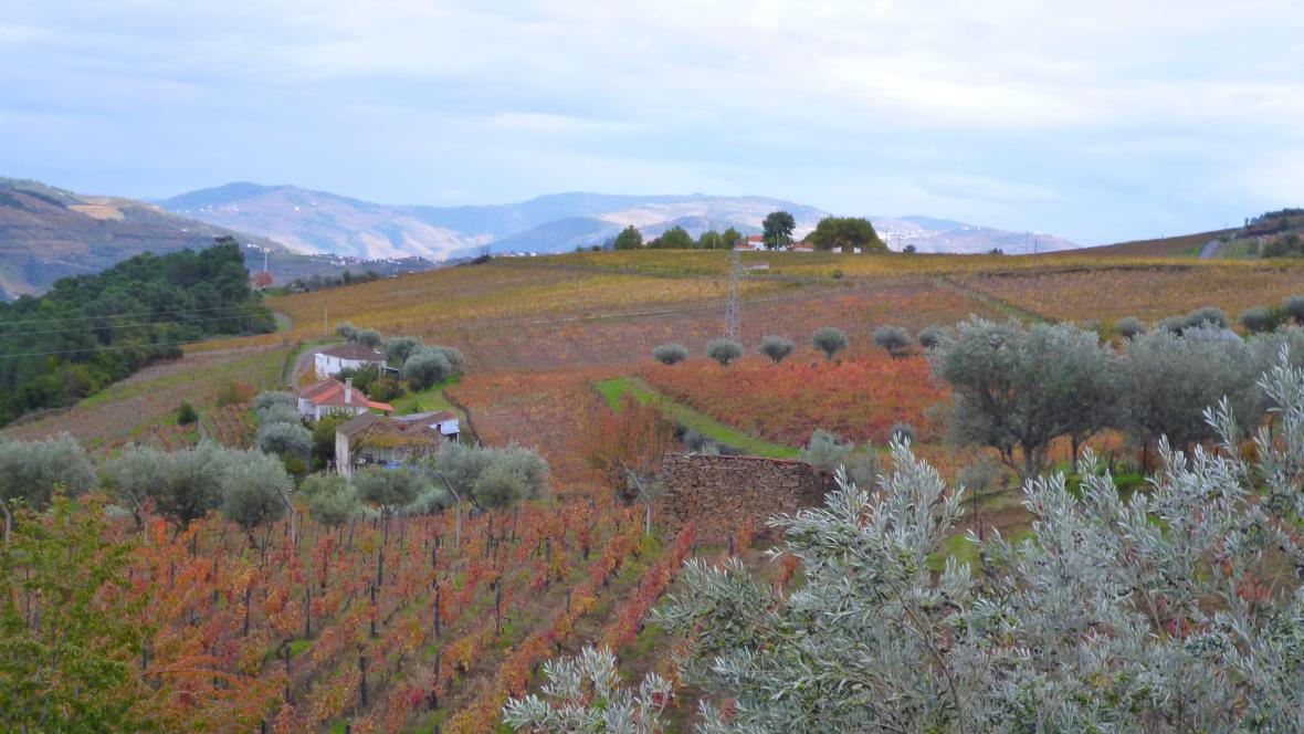 Vinice na svazích kolem řeky Douro