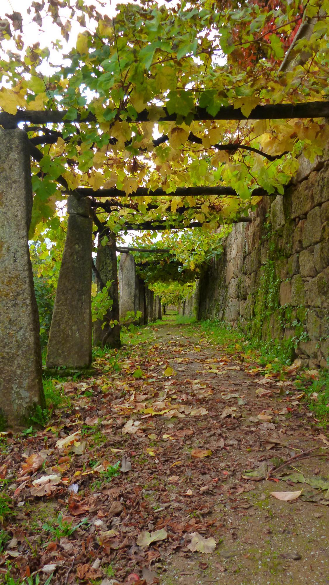 Vinná réva vtiskla kraji kolem Doura ducha