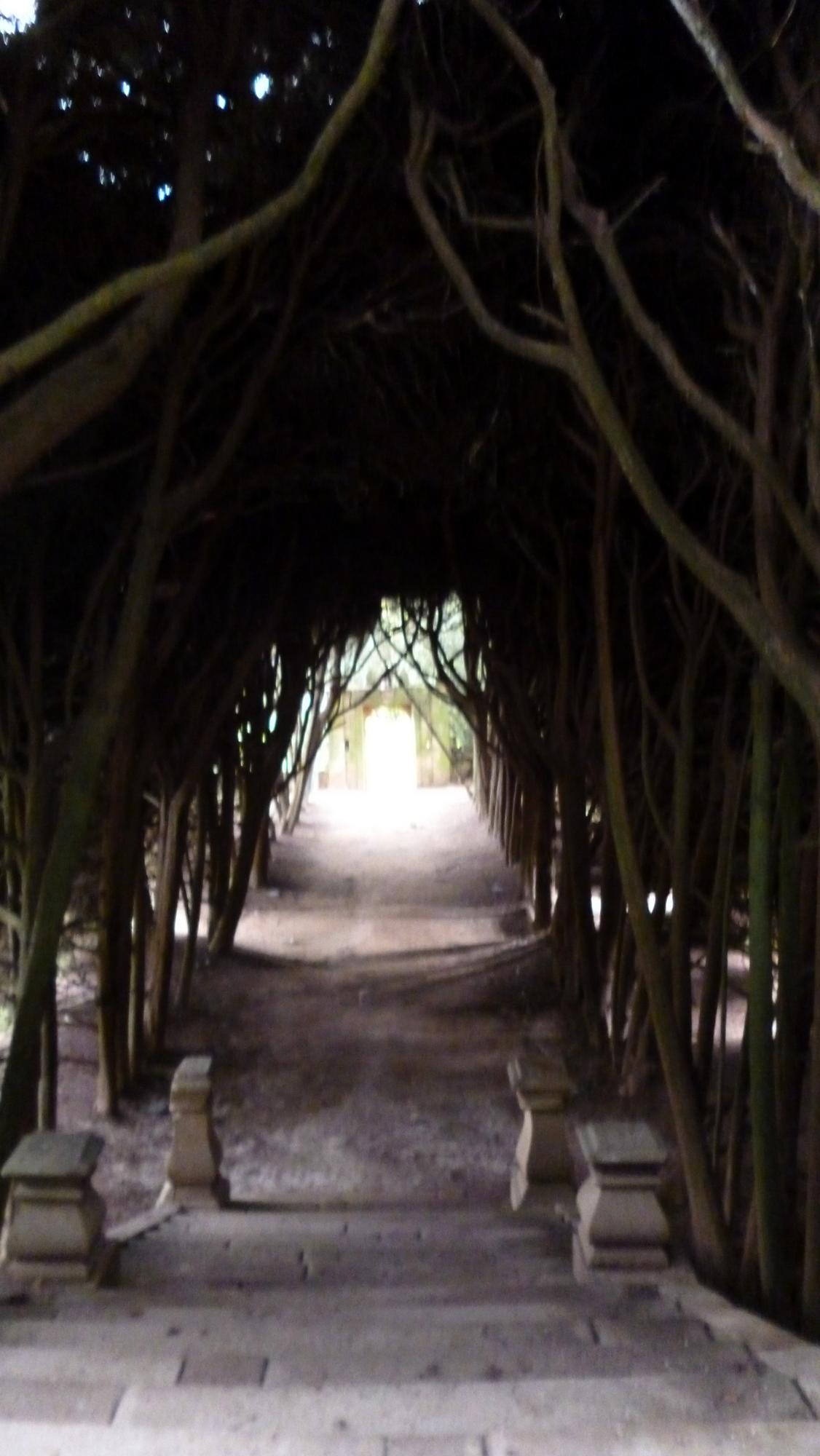 Tunel z cedrů v zahradách Casa de Mateus