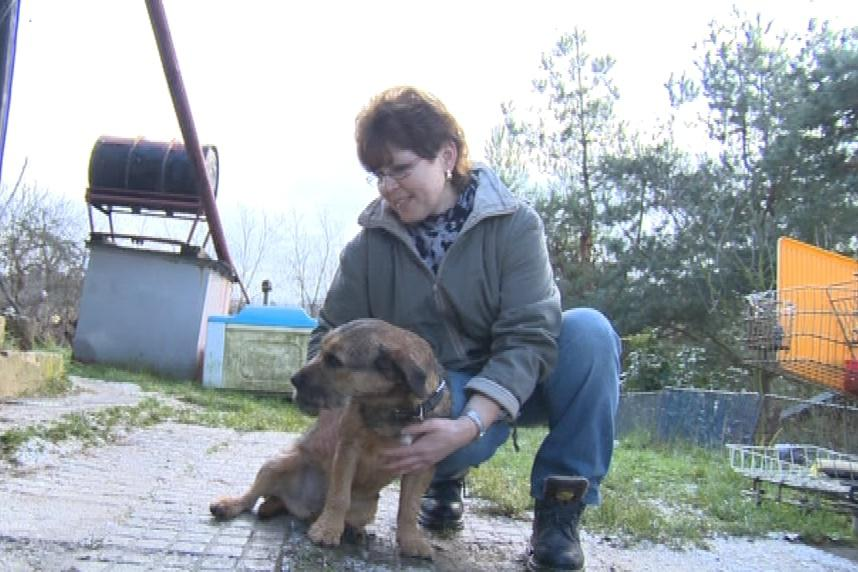 Majitelka stále věřila, že se k ní pes vrátí