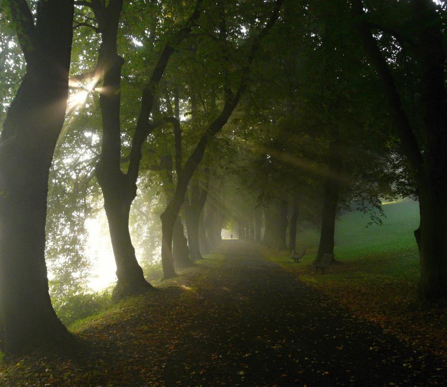 Alej v lázních v Jeseníku