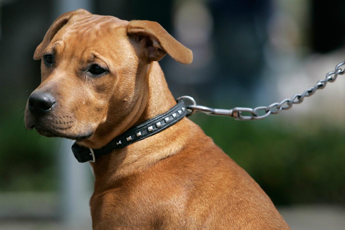 Na Slovensku zpřísňují zákony kvůli agresivním psům