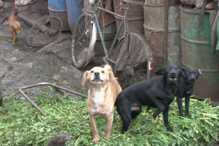 Bratři mají zhruba šest desítek psů