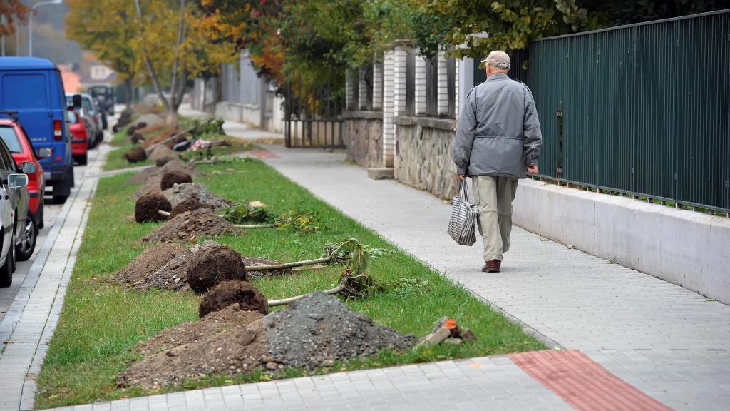 Pokus o rekord v sázení stromů - Květná ulice v Brně