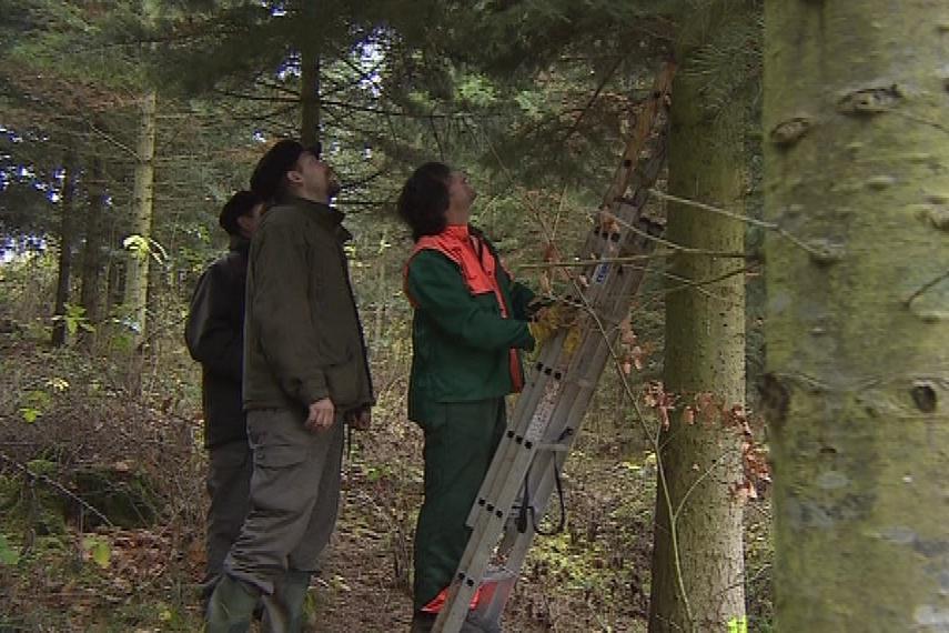 Lesníci