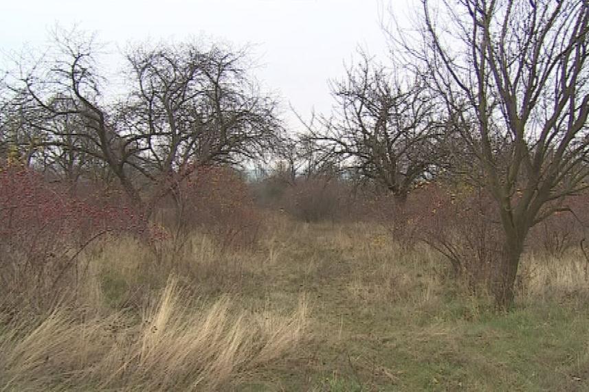 Okolí obce Horní Dubňany na Znojemsku tvořily ovocné sady
