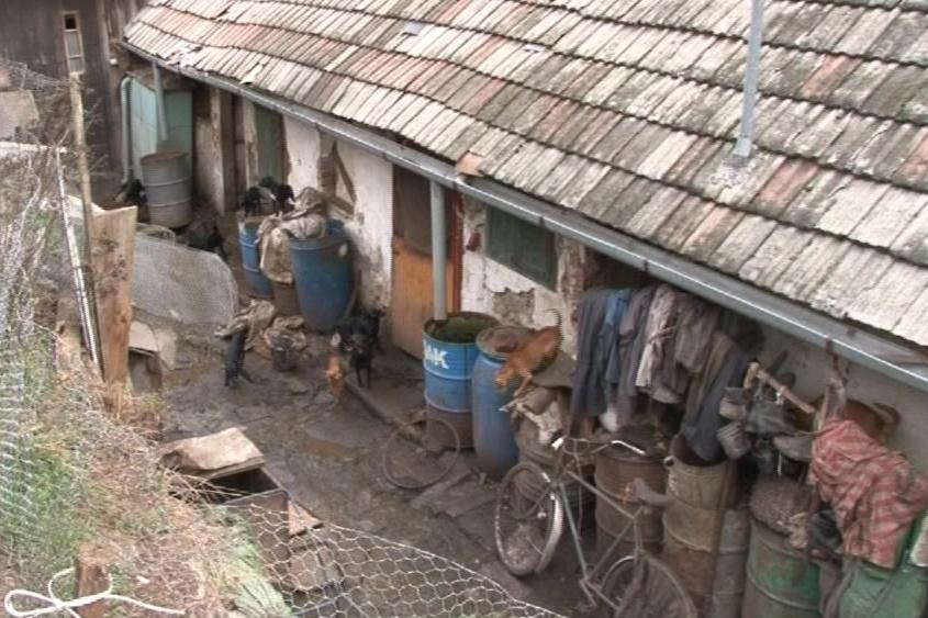 Na dvoře mají dva bratři několik desítek psů, slepic nebo králíků