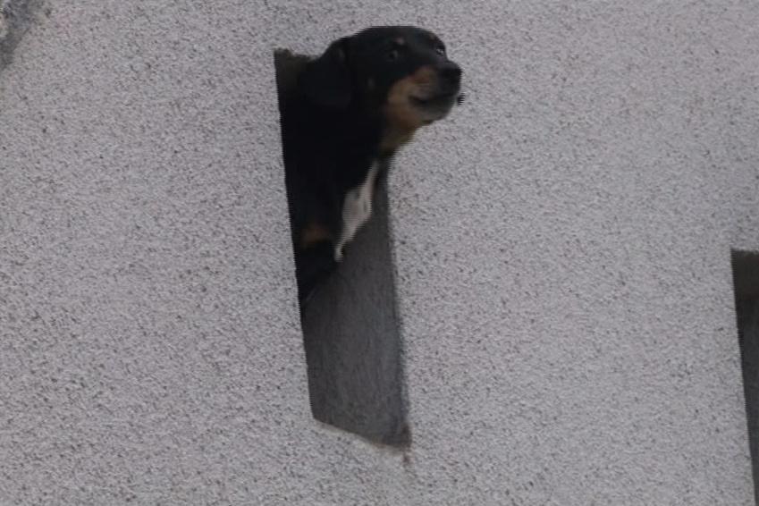 Liga na ochranu zvířat odebrala majitelům několik psů