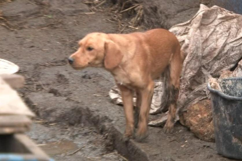 Psi žijí v otřesných podmínkách