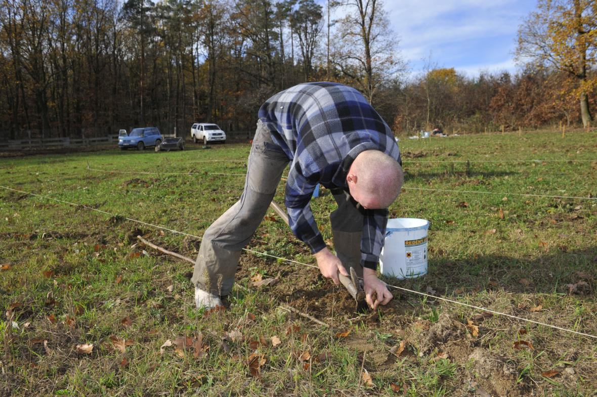 Na Prostějovsku roste první plantáž korkovníku