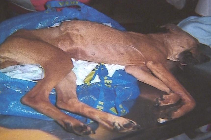 Utýraný pes