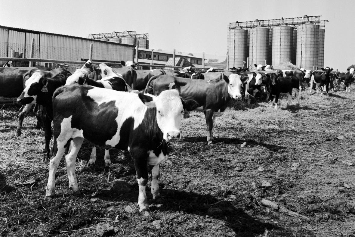 Československé zemědělství