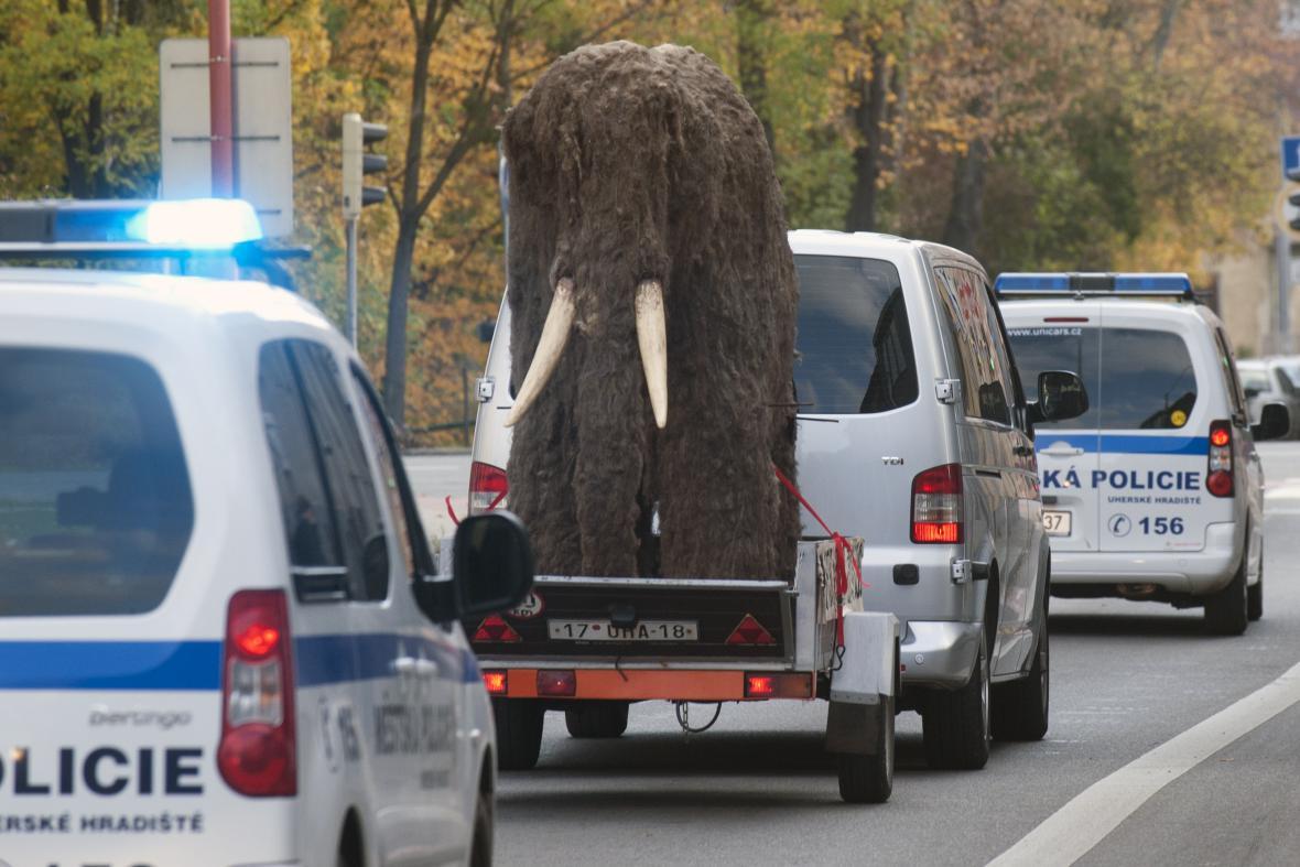 Mamuta na cestě doprovodili strážníci