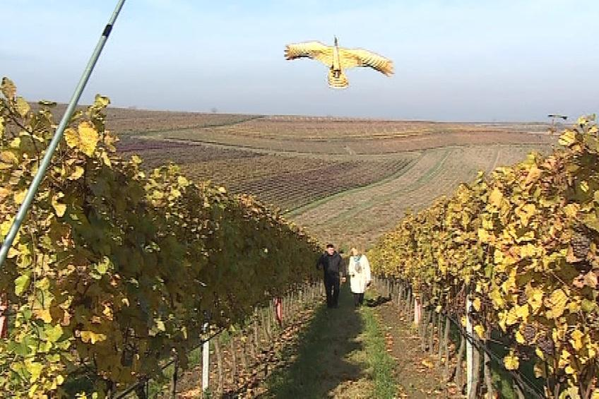Vinař František Mádl rozmístil draky na všechny své vinice