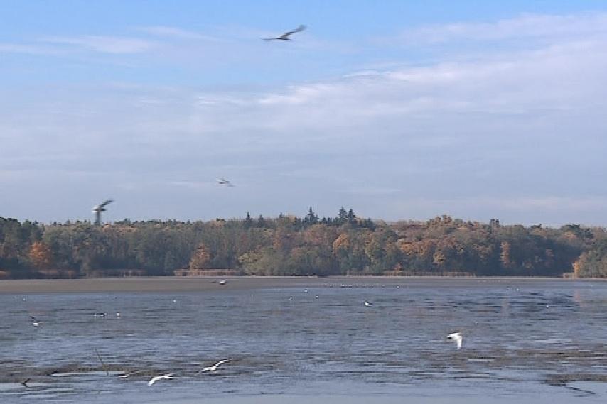 Lednické rybníky by měly být vylovené do konce listopadu