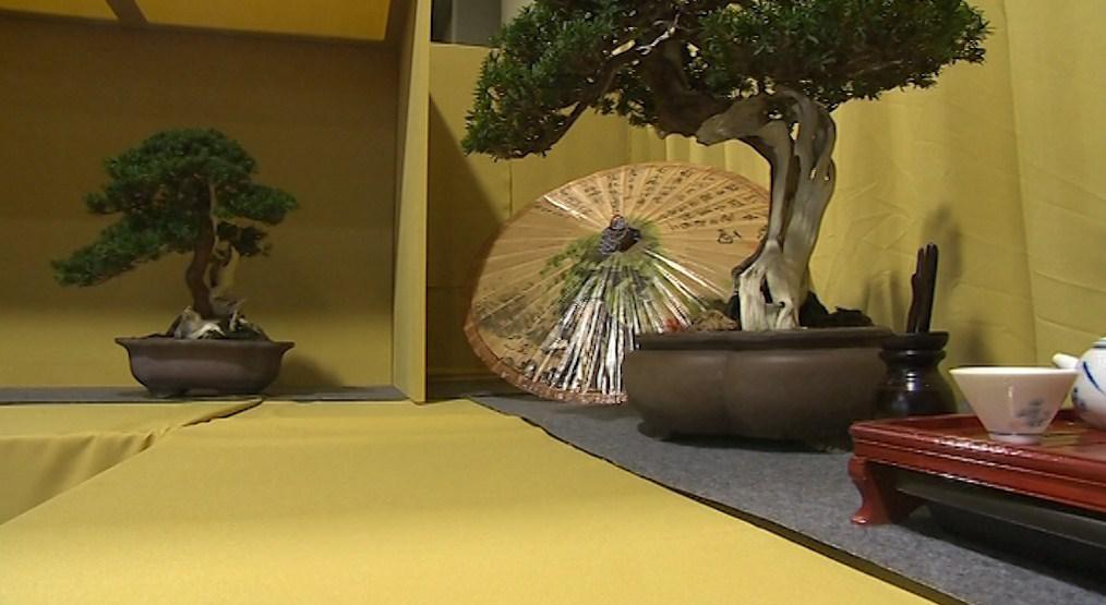 Výstava bonsají