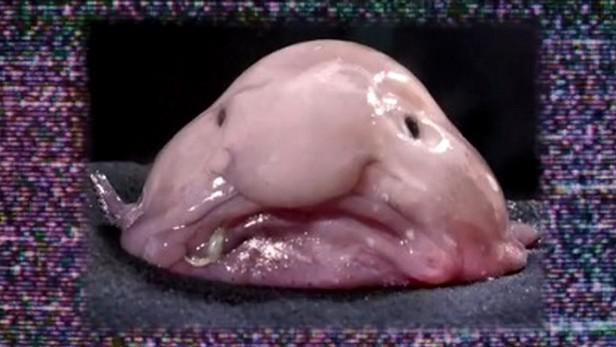 Sliznatá ryba