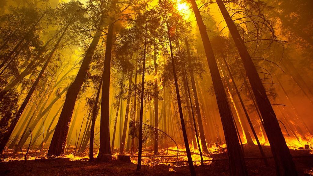 Yosemity v plamenech