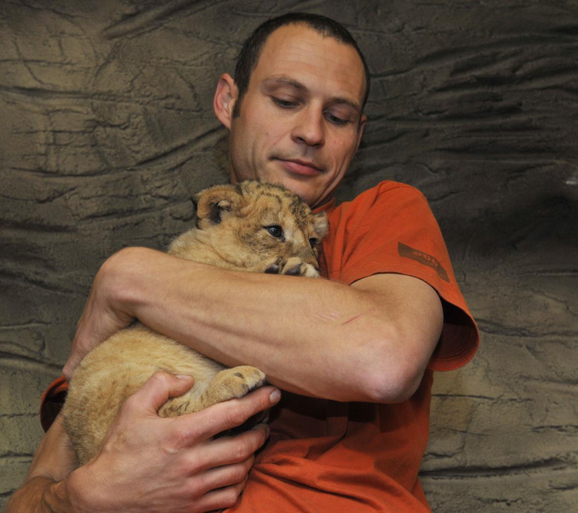 Ošetřovatel s mládětem lva berberského
