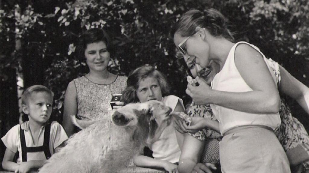 Návštěvnost brněnské zoo poklesla v 80. a 90. letech