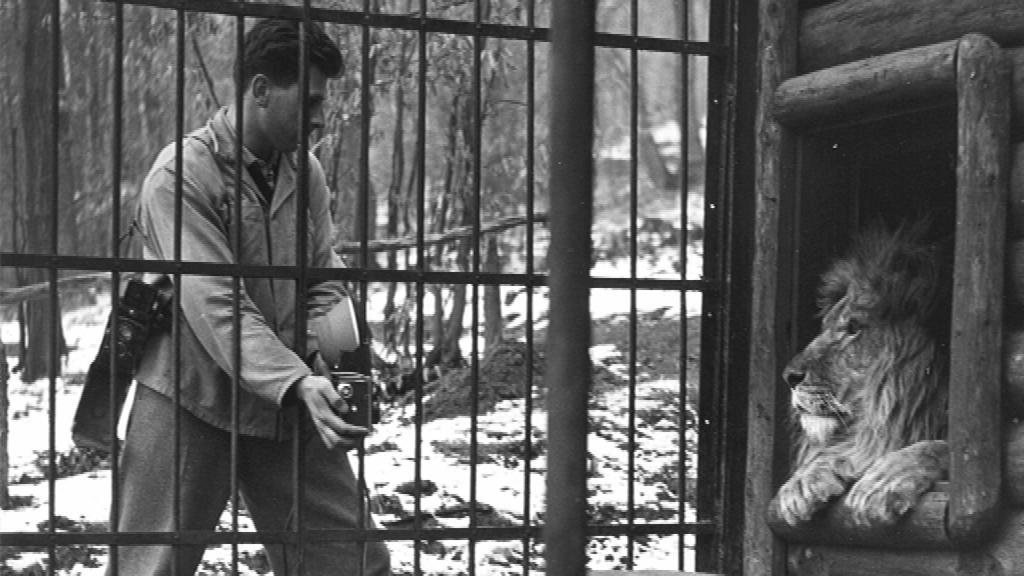 Brněnská zoo letos slaví 60. výročí svého vzniku