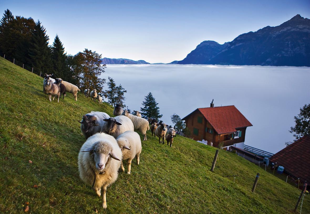 Nad Lucernským jezerem