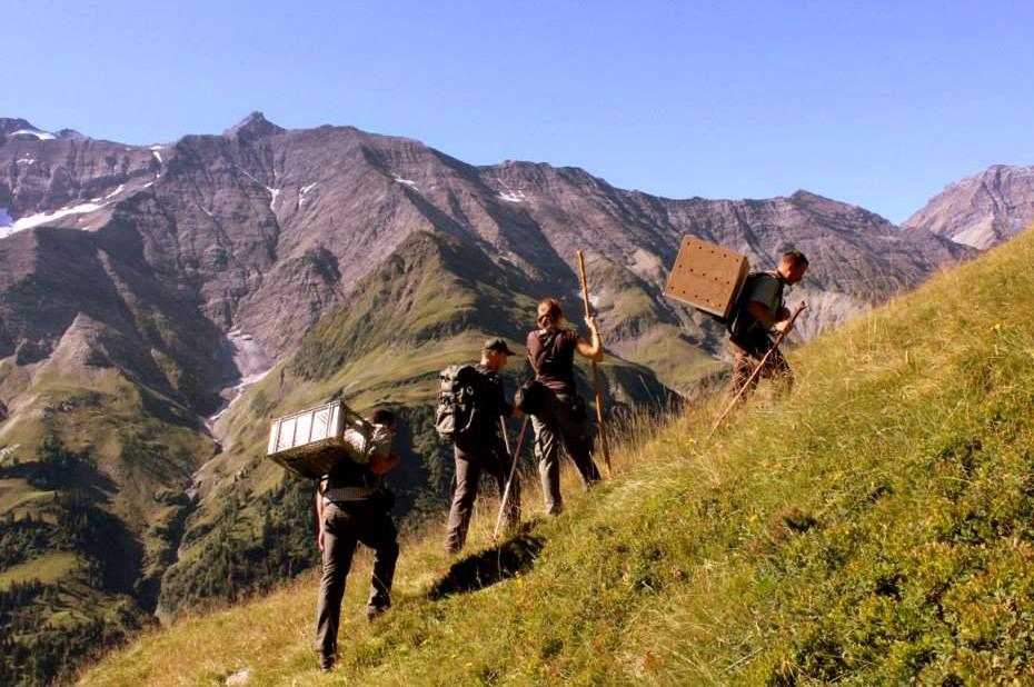 Zoologové vynášejí Bernd do vysokých hor