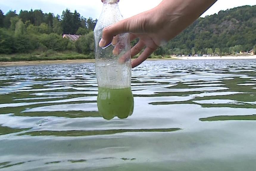 Voda v přehradě je v létě plná sinic