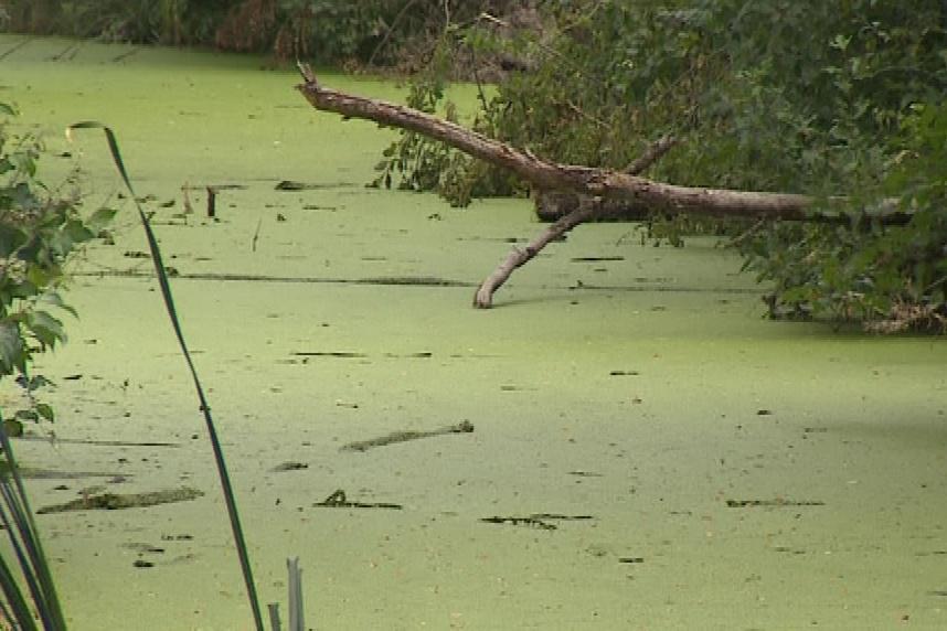 Rybníky zapáchaly a téměř nic v nich nežilo