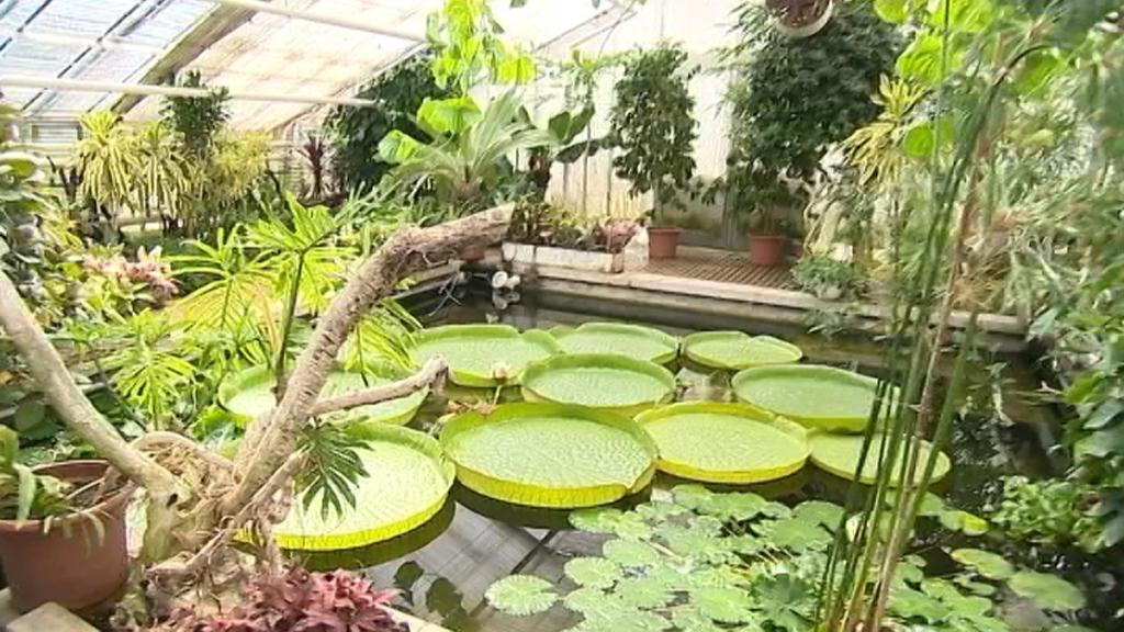 Leknín na olomouckém výstavišti Flora