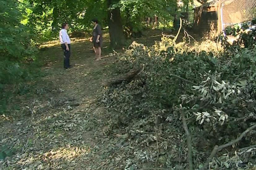 Podle majitelky zámku Evy Gajdošík je přestárlý park nebezpečný