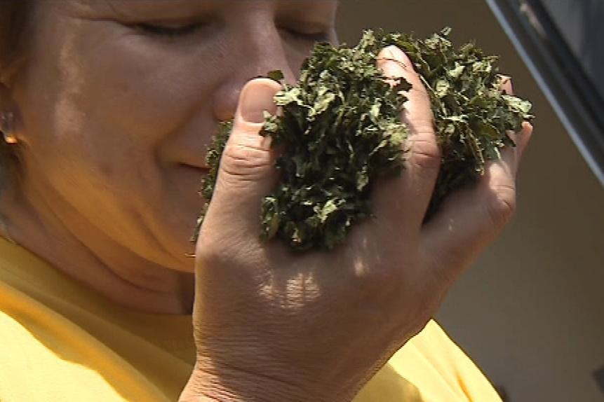 Firma vykupuje bylinky od českých farmářů