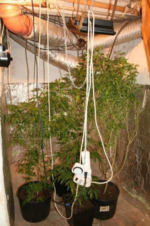 Policisté zabavili 250 rostlin