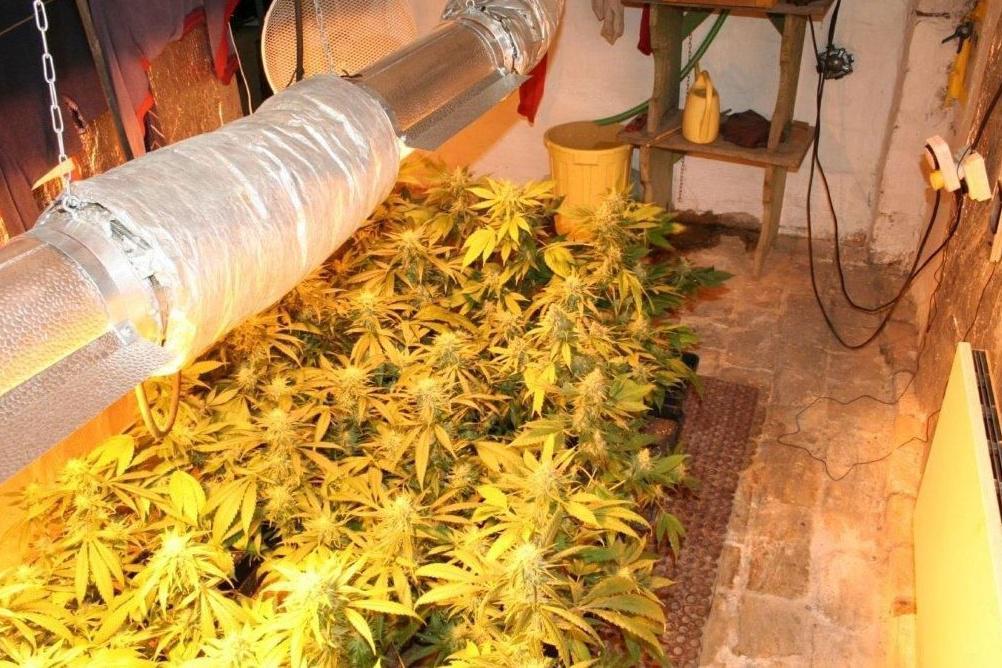Muži pěstovali marihuanu několik let