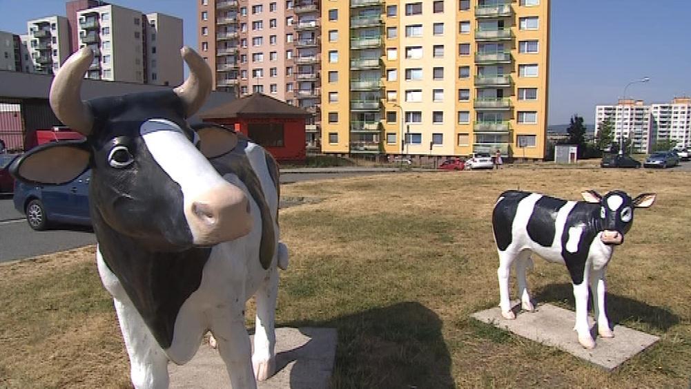 K mlékomatu v Brně-Novém Lískovci lákají plastiky krav