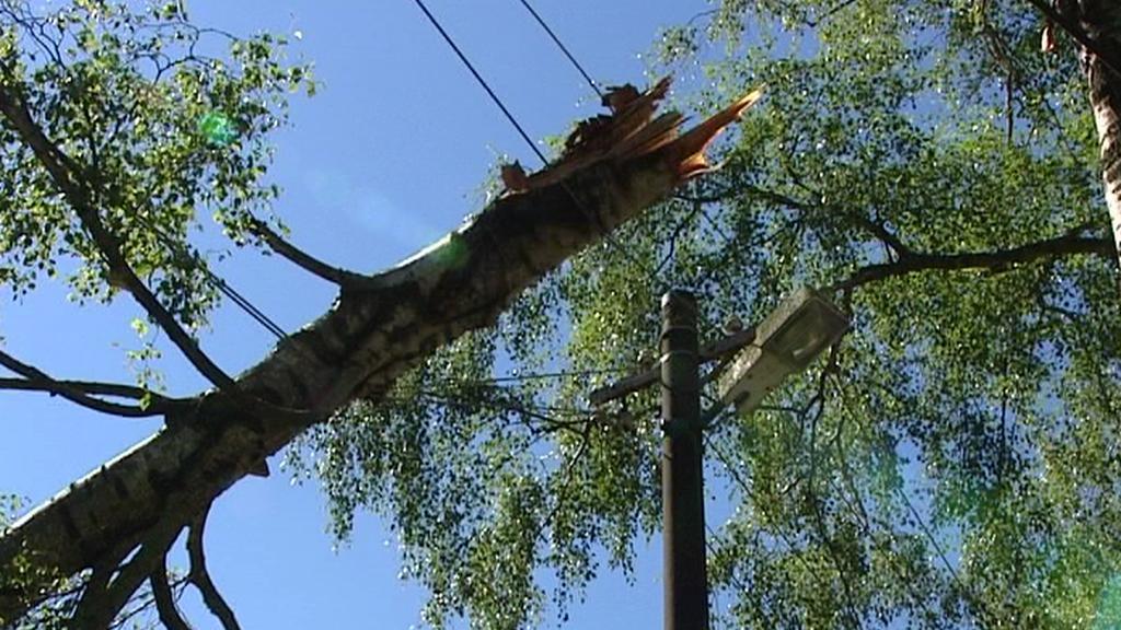Strom spadlý na elektrickém vedení