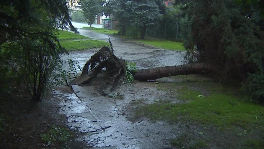 Bouřka vyvracela na mnoha místech celé stromy