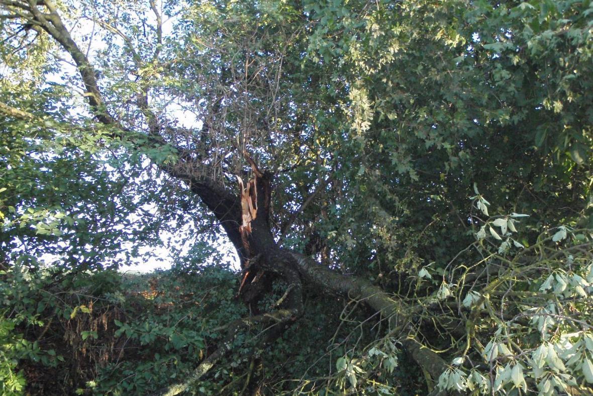 Prudký vítr lámal stromy