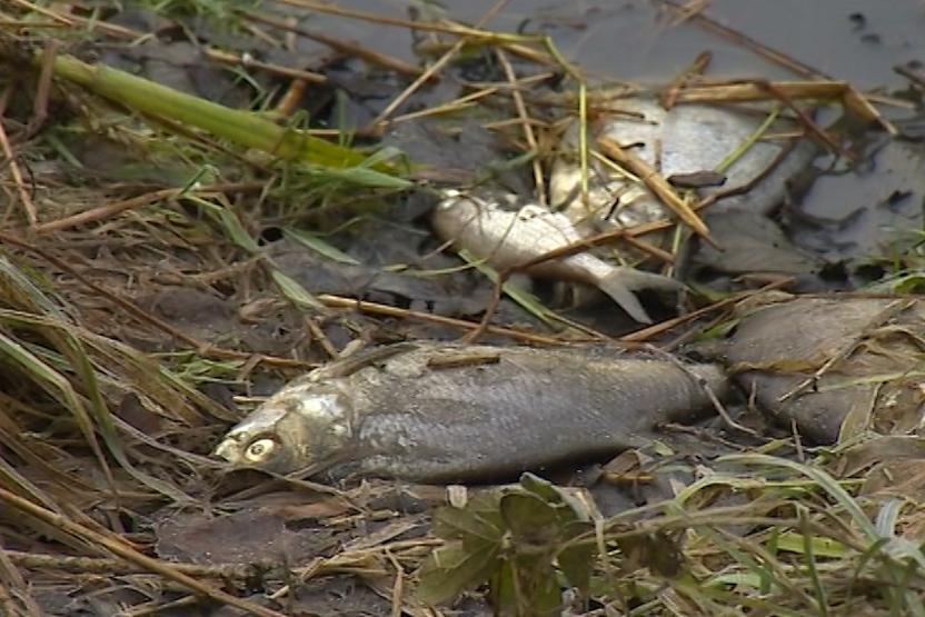Poslední dny jsou pohromou pro rybáře